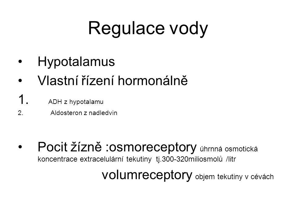 Regulace vody Hypotalamus Vlastní řízení hormonálně 1. ADH z hypotalamu 2. Aldosteron z nadledvin Pocit žízně :osmoreceptory úhrnná osmotická koncentr