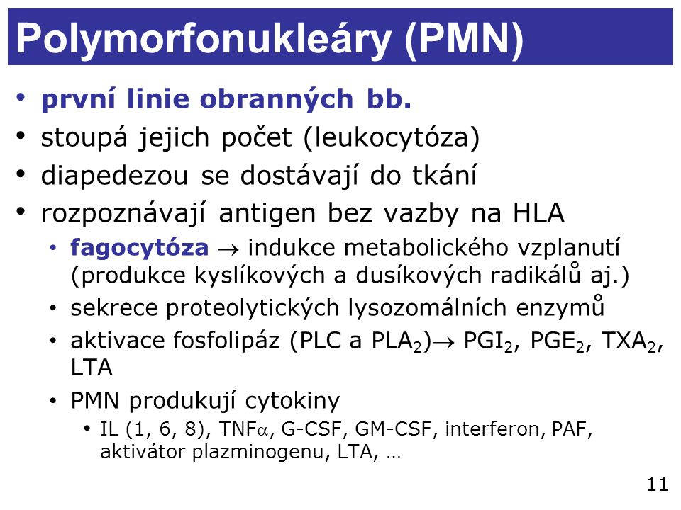 11 Polymorfonukleáry (PMN) první linie obranných bb. stoupá jejich počet (leukocytóza) diapedezou se dostávají do tkání rozpoznávají antigen bez vazby