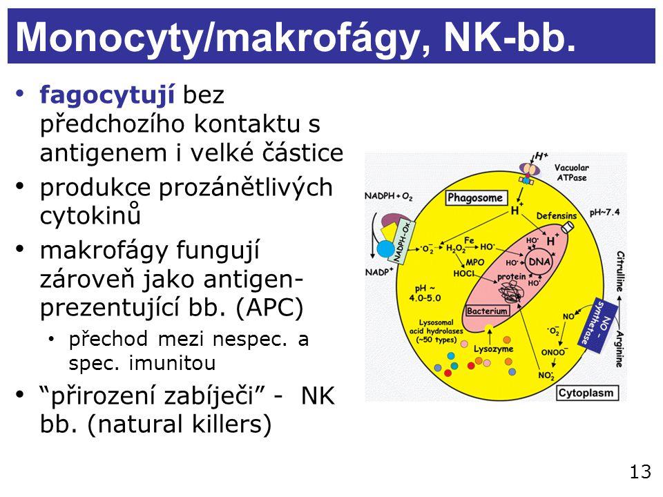 Monocyty/makrofágy, NK-bb. fagocytují bez předchozího kontaktu s antigenem i velké částice produkce prozánětlivých cytokinů makrofágy fungují zároveň