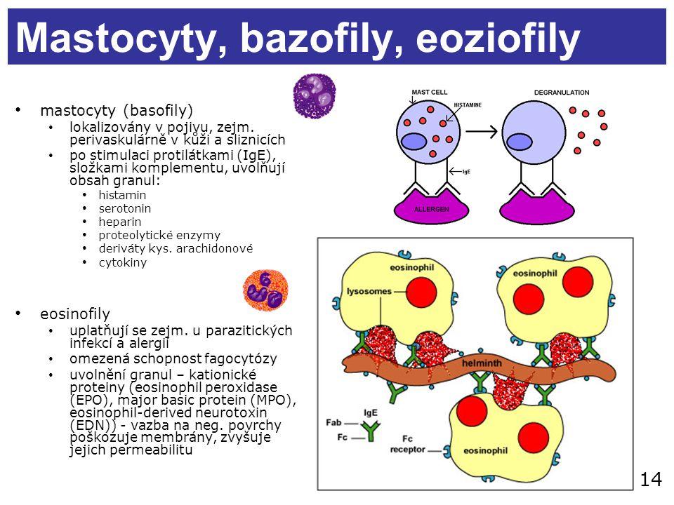 14 Mastocyty, bazofily, eoziofily mastocyty (basofily) lokalizovány v pojivu, zejm. perivaskulárně v kůži a sliznicích po stimulaci protilátkami (IgE)