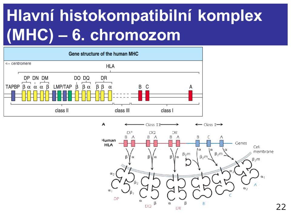 22 Hlavní histokompatibilní komplex (MHC) – 6. chromozom
