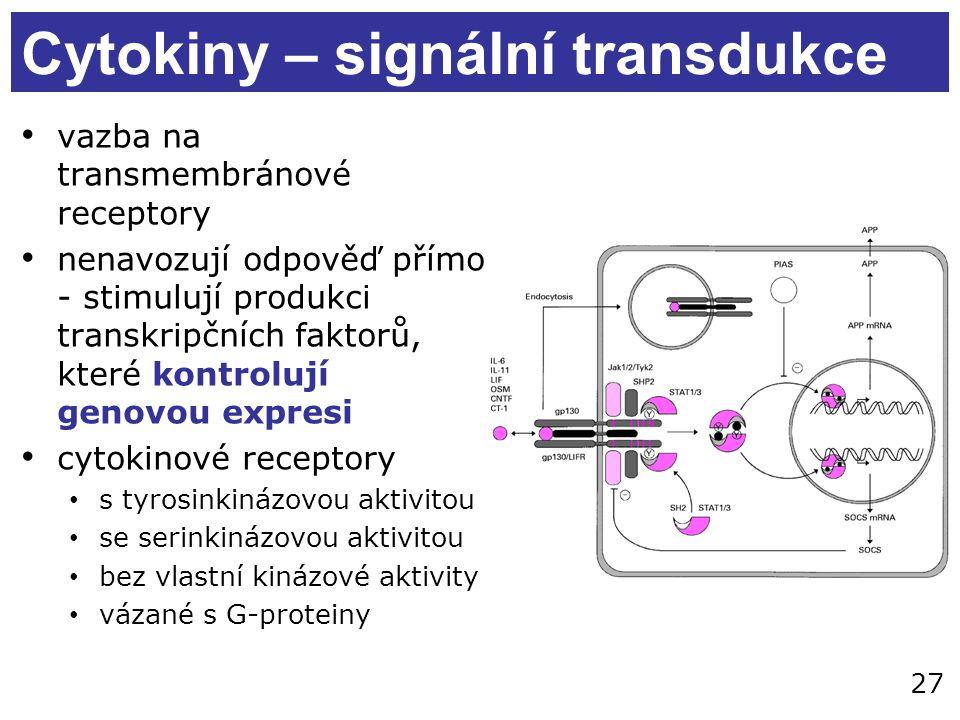 27 Cytokiny – signální transdukce vazba na transmembránové receptory nenavozují odpověď přímo - stimulují produkci transkripčních faktorů, které kontrolují genovou expresi cytokinové receptory s tyrosinkinázovou aktivitou se serinkinázovou aktivitou bez vlastní kinázové aktivity vázané s G-proteiny