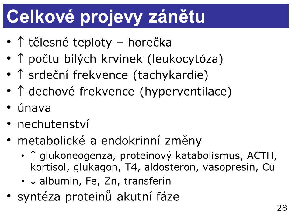 28 Celkové projevy zánětu  tělesné teploty – horečka  počtu bílých krvinek (leukocytóza)  srdeční frekvence (tachykardie)  dechové frekvence (hyperventilace) únava nechutenství metabolické a endokrinní změny  glukoneogenza, proteinový katabolismus, ACTH, kortisol, glukagon, T4, aldosteron, vasopresin, Cu  albumin, Fe, Zn, transferin syntéza proteinů akutní fáze