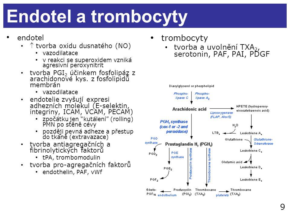 9 Endotel a trombocyty endotel  tvorba oxidu dusnatého (NO) vazodilatace v reakci se superoxidem vzniká agresivní peroxynitrit tvorba PGI 2 účinkem fosfolipáz z arachidonové kys.