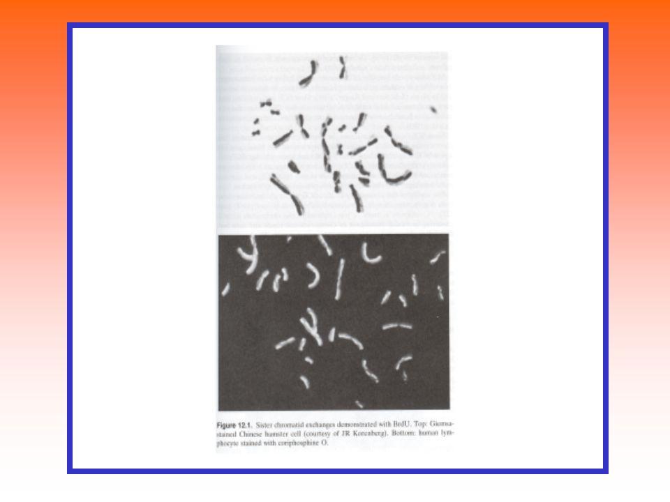 FISH - fluorescenční in situ hybridizace Použití sondy komplementární ke sledovanému úseku DNA, denaturace, hybridizace Sondy značené: radioaktivně ( zač.