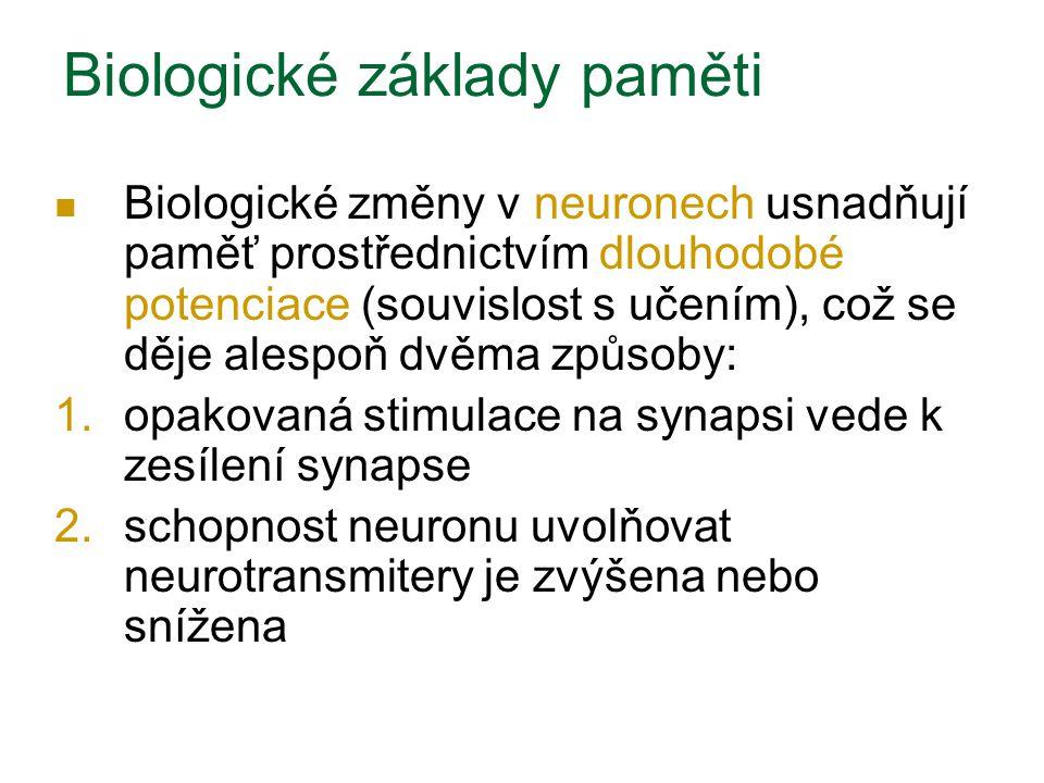 Biologické základy paměti Biologické změny v neuronech usnadňují paměť prostřednictvím dlouhodobé potenciace (souvislost s učením), což se děje alespoň dvěma způsoby: 1.opakovaná stimulace na synapsi vede k zesílení synapse 2.schopnost neuronu uvolňovat neurotransmitery je zvýšena nebo snížena