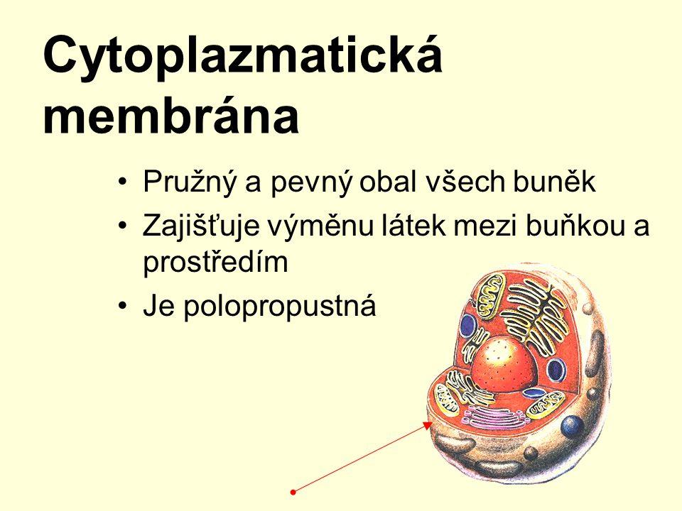 Cytoplazmatická membrána Pružný a pevný obal všech buněk Zajišťuje výměnu látek mezi buňkou a prostředím Je polopropustná