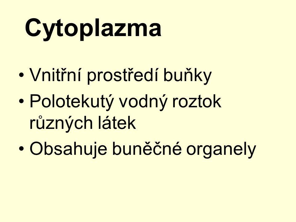 Cytoplazma Vnitřní prostředí buňky Polotekutý vodný roztok různých látek Obsahuje buněčné organely