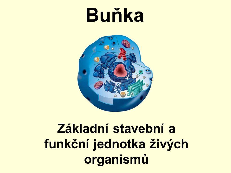 Buňka Základní stavební a funkční jednotka živých organismů