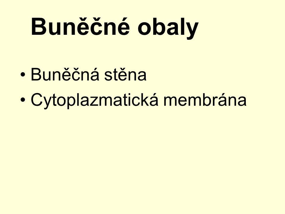 Buněčné obaly Buněčná stěna Cytoplazmatická membrána