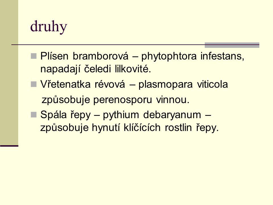 druhy Plísen bramborová – phytophtora infestans, napadají čeledi lilkovité. Vřetenatka révová – plasmopara viticola způsobuje perenosporu vinnou. Spál
