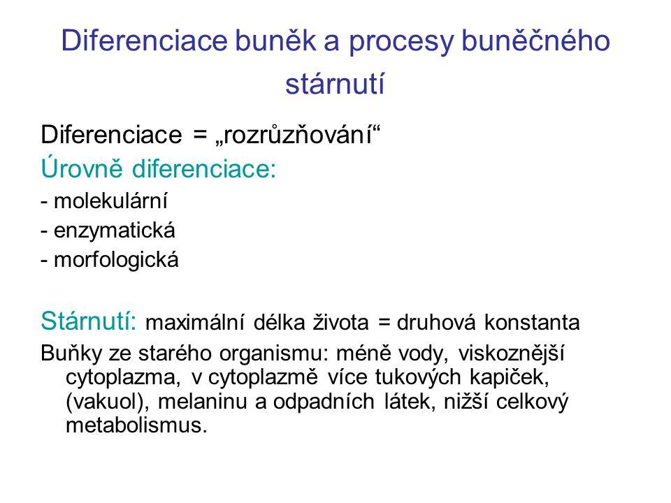 """Diferenciace buněk a procesy buněčného stárnutí Diferenciace = """"rozrůzňování"""" Úrovně diferenciace: - molekulární - enzymatická - morfologická Stárnutí"""