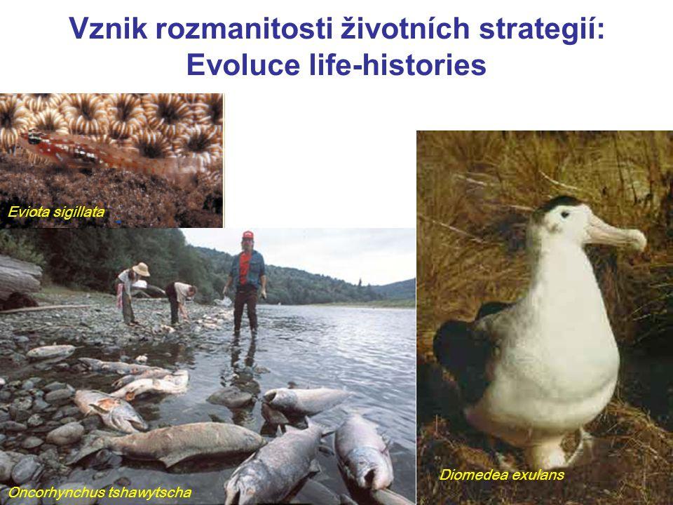 Vznik rozmanitosti životních strategií: Evoluce life-histories Diomedea exulans Eviota sigillata Oncorhynchus tshawytscha