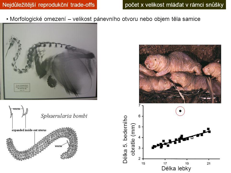 počet x velikost mláďat v rámci snůškyNejdůležitější reprodukční trade-offs Morfologické omezení – velikost pánevního otvoru nebo objem těla samice Sphaerularia bombi Délka lebky Délka 5.