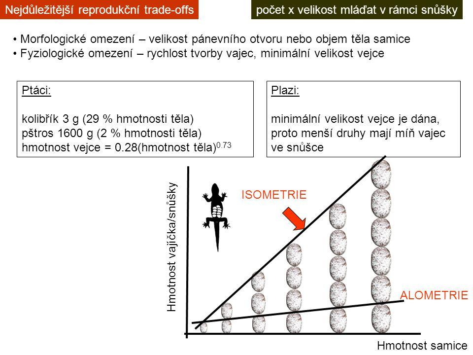 počet x velikost mláďat v rámci snůškyNejdůležitější reprodukční trade-offs Morfologické omezení – velikost pánevního otvoru nebo objem těla samice Fyziologické omezení – rychlost tvorby vajec, minimální velikost vejce Ptáci: kolibřík 3 g (29 % hmotnosti těla) pštros 1600 g (2 % hmotnosti těla) hmotnost vejce = 0.28(hmotnost těla) 0.73 Hmotnost samice Hmotnost vajíčka/snůšky ISOMETRIE Plazi: minimální velikost vejce je dána, proto menší druhy mají míň vajec ve snůšce ALOMETRIE