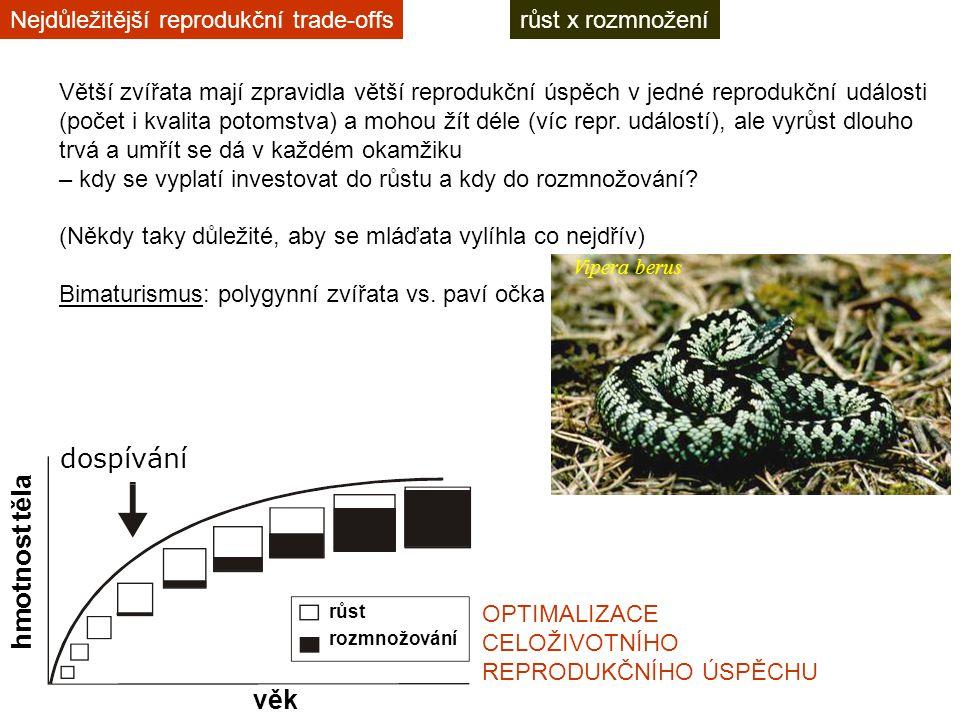 růst x rozmnoženíNejdůležitější reprodukční trade-offs Větší zvířata mají zpravidla větší reprodukční úspěch v jedné reprodukční události (počet i kvalita potomstva) a mohou žít déle (víc repr.