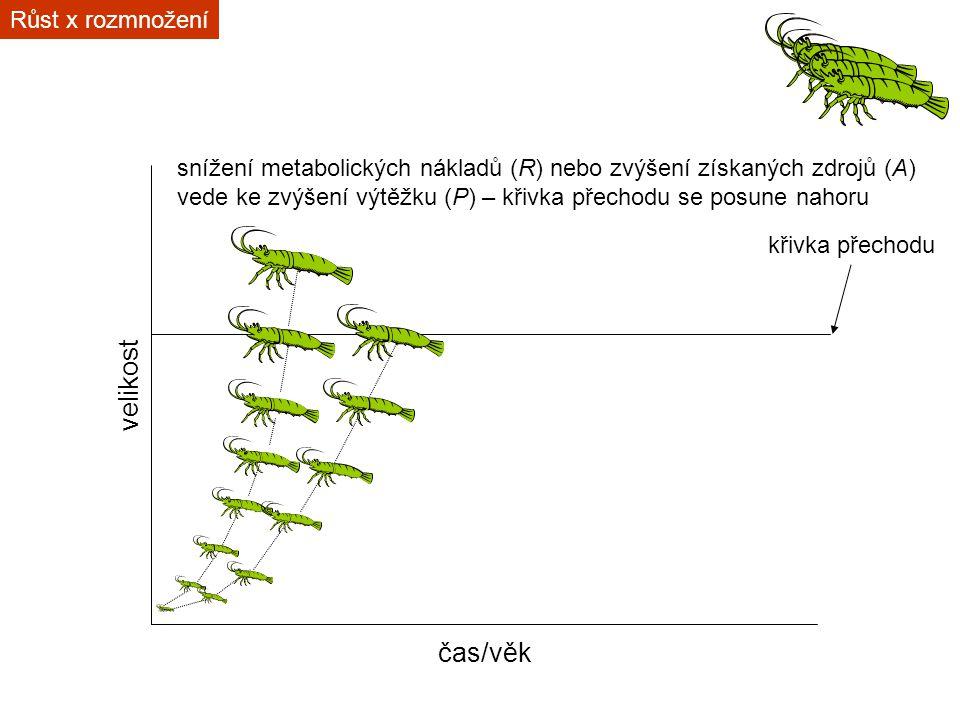 čas/věk velikost křivka přechodu snížení metabolických nákladů (R) nebo zvýšení získaných zdrojů (A) vede ke zvýšení výtěžku (P) – křivka přechodu se posune nahoru Růst x rozmnožení