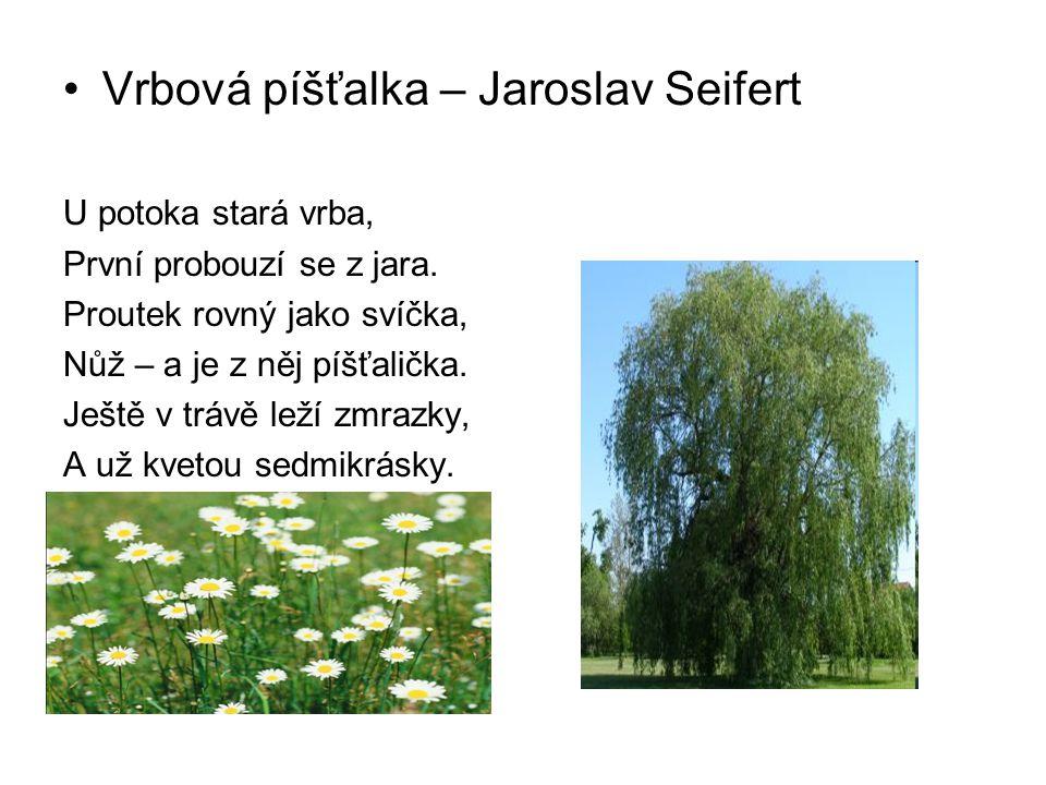 Vrbová píšťalka – Jaroslav Seifert U potoka stará vrba, První probouzí se z jara. Proutek rovný jako svíčka, Nůž – a je z něj píšťalička. Ještě v tráv