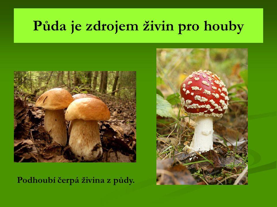 Půda je zdrojem živin pro houby Podhoubí čerpá živina z půdy.