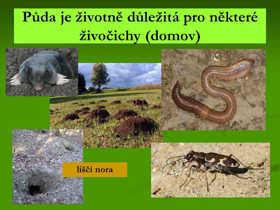 Půda je životně důležitá pro některé živočichy (domov) liščí nora