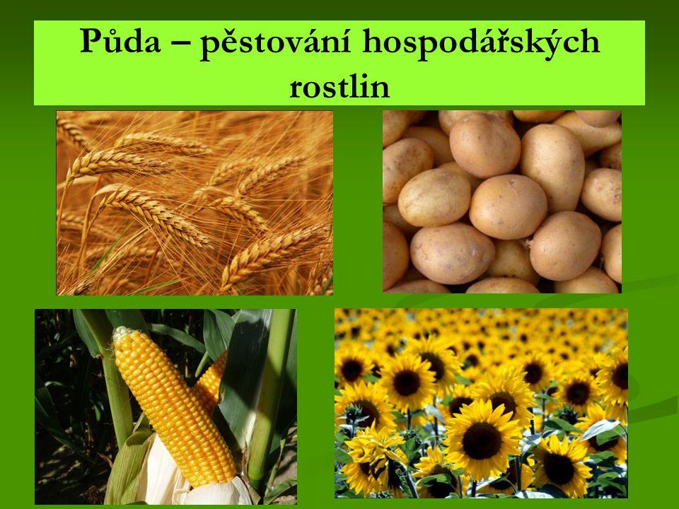 Půda – pěstování hospodářských rostlin