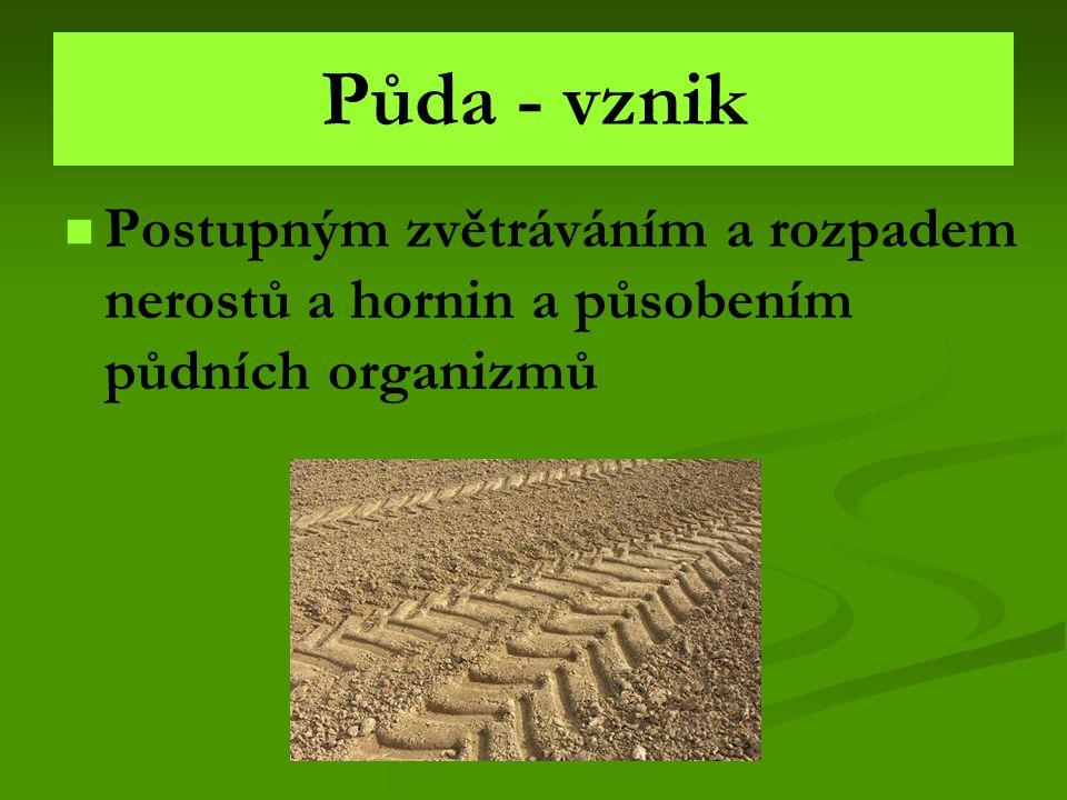 Složení půdy HUMUS vrchní tmavá část půdy VLASTNÍ PŮDA zvětralé části nerostů a hornin PŮVODNÍ PEVNÁ HORNINA nejhlubší vrstva Půda také obsahuje – půdní vodu, půdní vzduch a živé organizmy