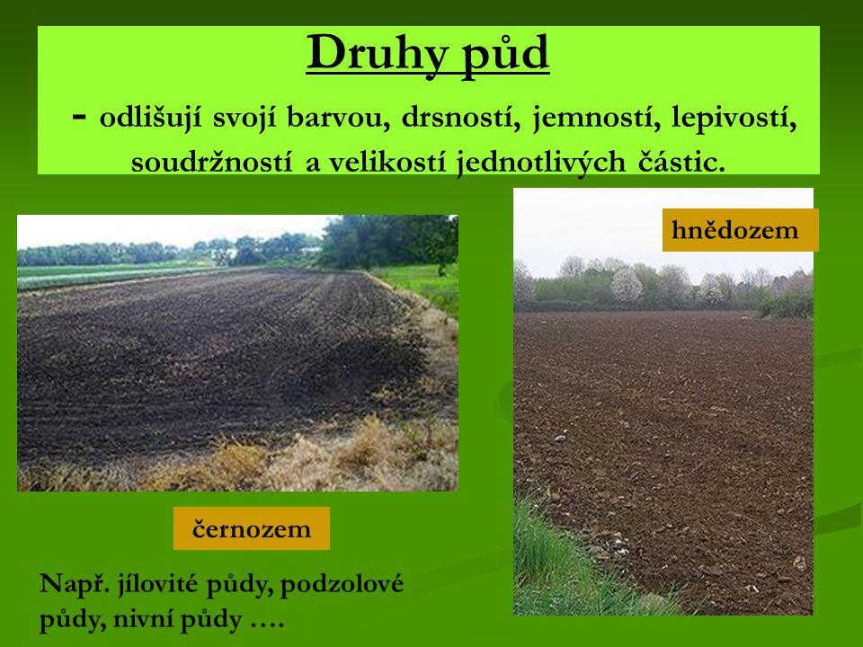 Význam půdy Půda je životně důležitá pro většinu rostlin – je zdrojem živin (kořeny)