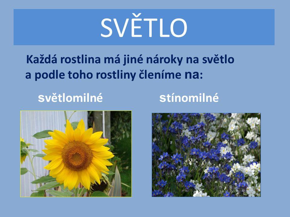 SVĚTLO Každá rostlina má jiné nároky na světlo a podle toho rostliny členíme na : s větlomilné s tínomilné