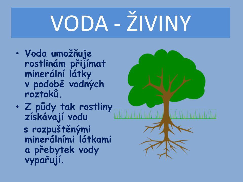 VZDUCH Rostliny dýchají vzduch všemi orgány včetně kořenů.