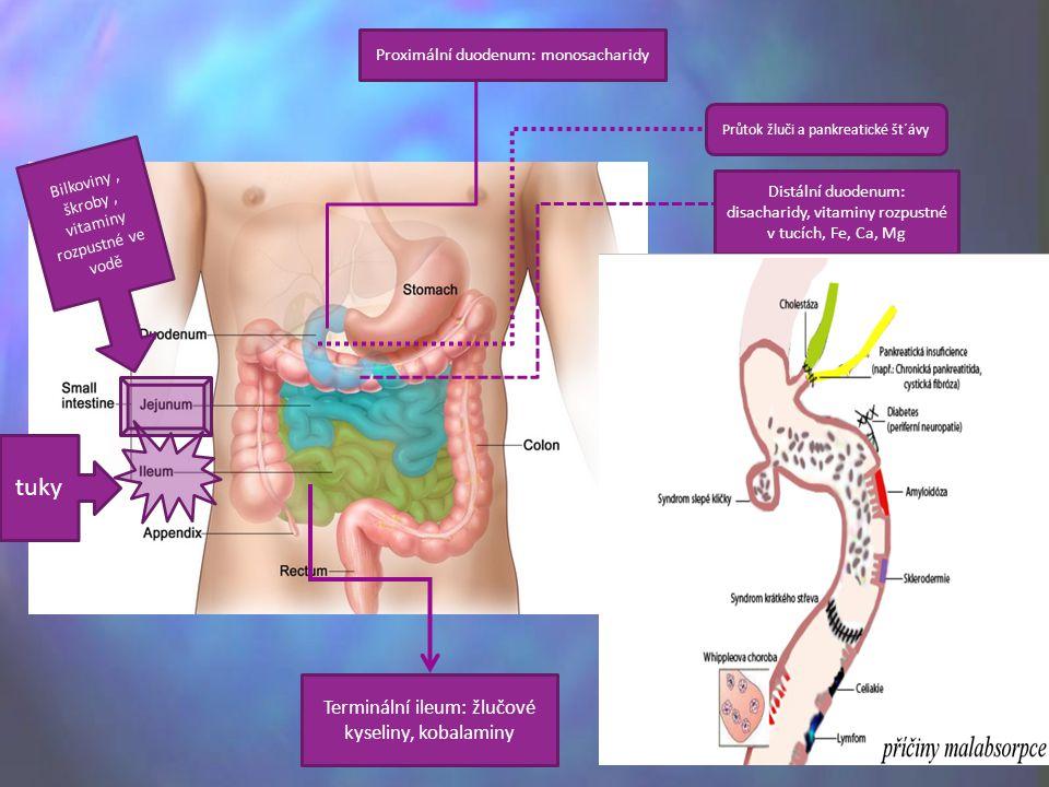 Proximální duodenum: monosacharidy Průtok žluči a pankreatické št´ávy Distální duodenum: disacharidy, vitaminy rozpustné v tucích, Fe, Ca, Mg Bilkoviny, škroby, vitaminy rozpustné ve vodě tuky Terminální ileum: žlučové kyseliny, kobalaminy