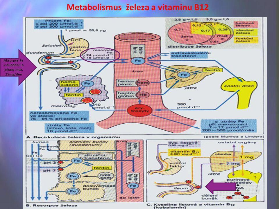 Metabolismus železa a vitaminu B12 Absorpce Fe v duodenu a jejunu max. 25mg/den