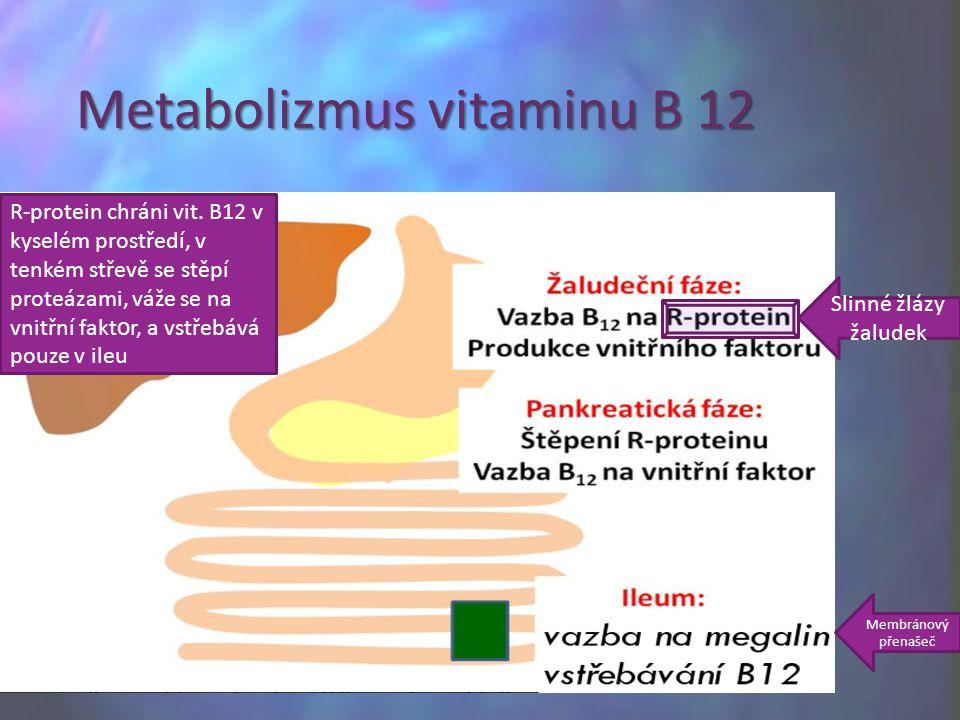 Metabolizmus vitaminu B 12 Slinné žlázy žaludek R-protein chráni vit. B12 v kyselém prostředí, v tenkém střevě se stěpí proteázami, váže se na vnitřní