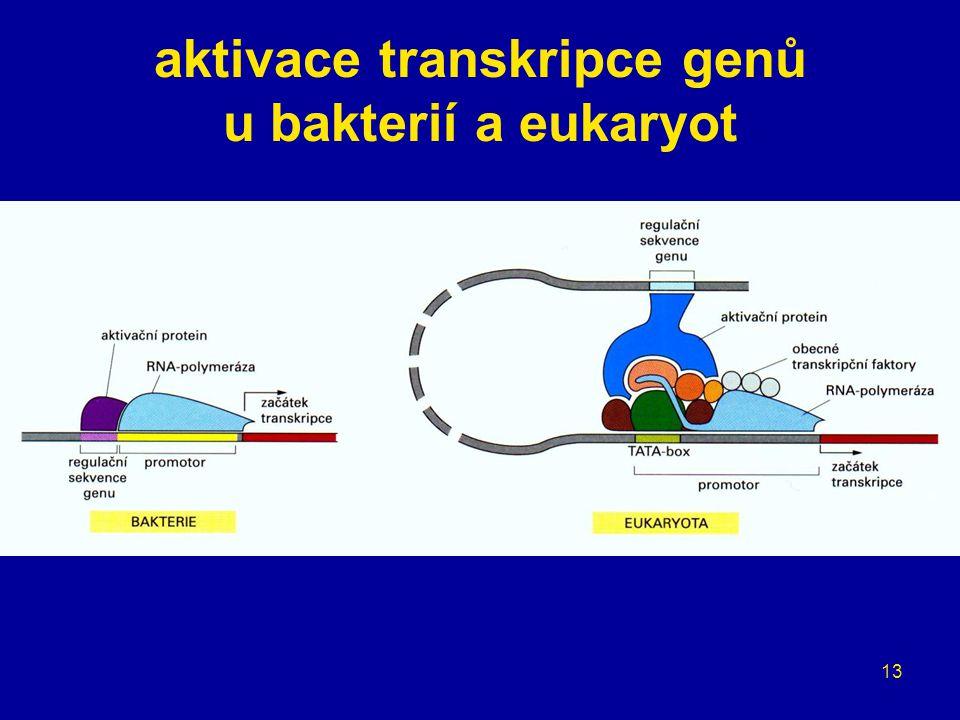 13 aktivace transkripce genů u bakterií a eukaryot