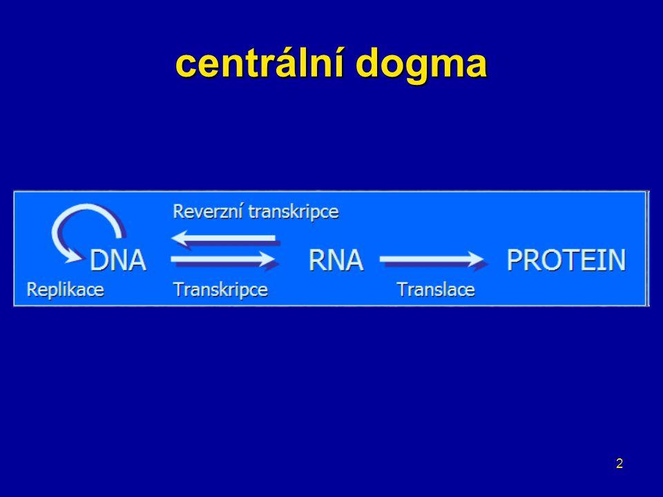 3 replikace DNA základem je párování bazí dva řetězce – oba slouží jako předloha (templát) → semikonzervativní oddělení řetězců –iniciační proteiny –replikační počátky bohaté na A=T páry –replikační vidličky oba směry vždy 5´ → 3´