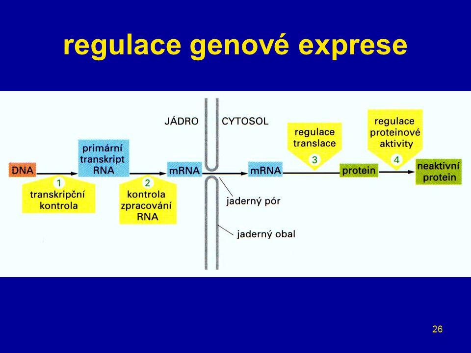 26 regulace genové exprese
