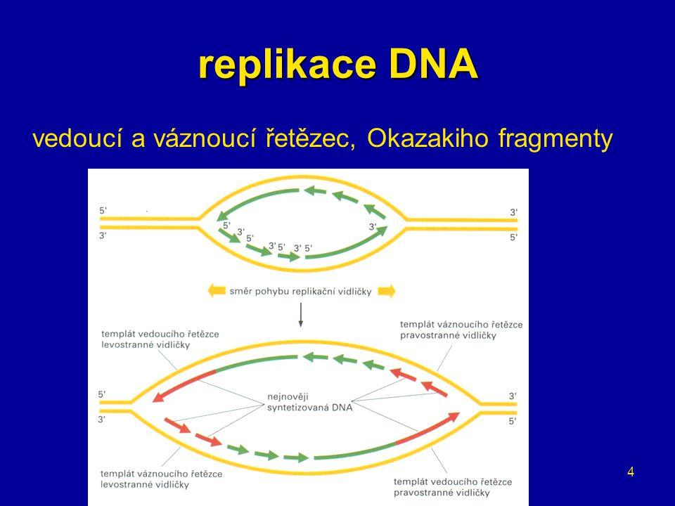15 transkripce posttranskripční úpravy hnRNA → pre-mRNA –methylgunosinová čepička a poly-A konec
