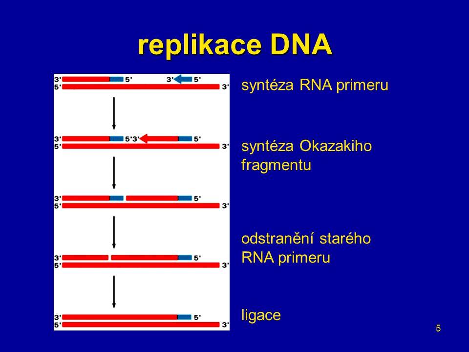 5 replikace DNA syntéza RNA primeru syntéza Okazakiho fragmentu odstranění starého RNA primeru ligace