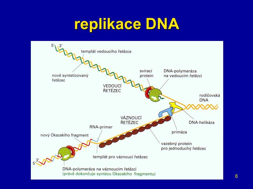 17 translace = překlad gen info z mRNA do sekvence AK probíhá na ribozomu –velká a malá podjednotka –proteiny a rRNA –vazba mRNA –vazebná místa pro tRNA vazba mRNA a tRNA –triplety nukleotidů –kodón a antikodón
