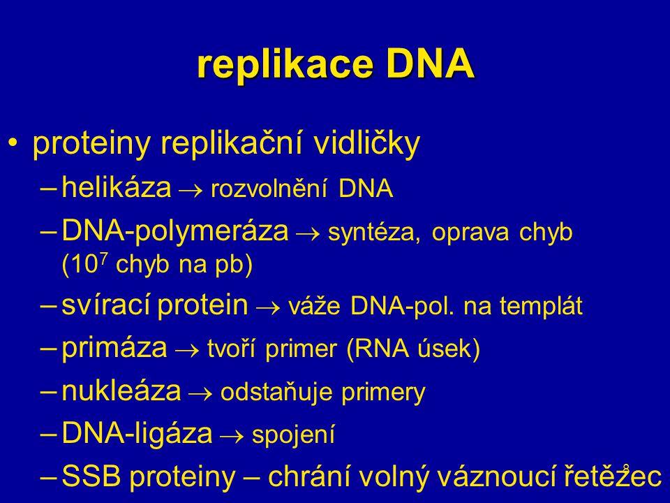 8 proteiny replikační vidličky –helikáza  rozvolnění DNA –DNA-polymeráza  syntéza, oprava chyb (10 7 chyb na pb) –svírací protein  váže DNA-pol.