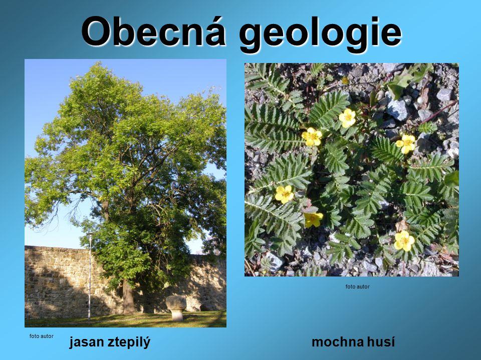 Obecná geologie jasan ztepilý mochna husí foto autor