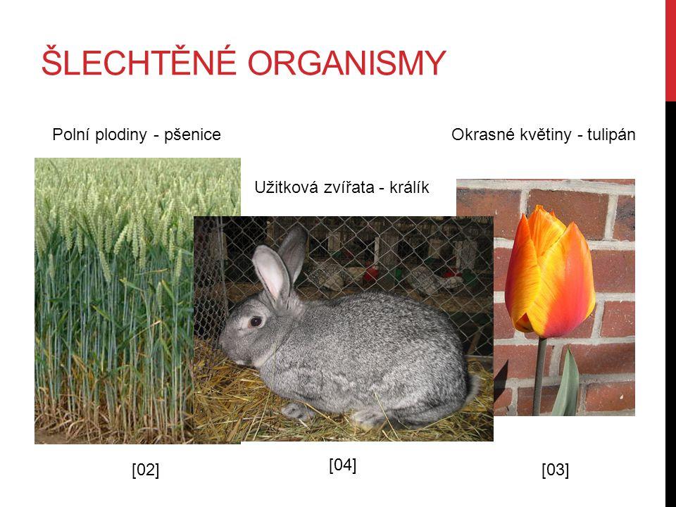 ŠLECHTĚNÉ ORGANISMY Polní plodiny - pšenice [02] Okrasné květiny - tulipán [03] Užitková zvířata - králík [04]