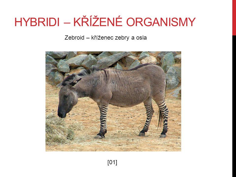 HYBRIDI – KŘÍŽENÉ ORGANISMY Zebroid – kříženec zebry a osla [01]