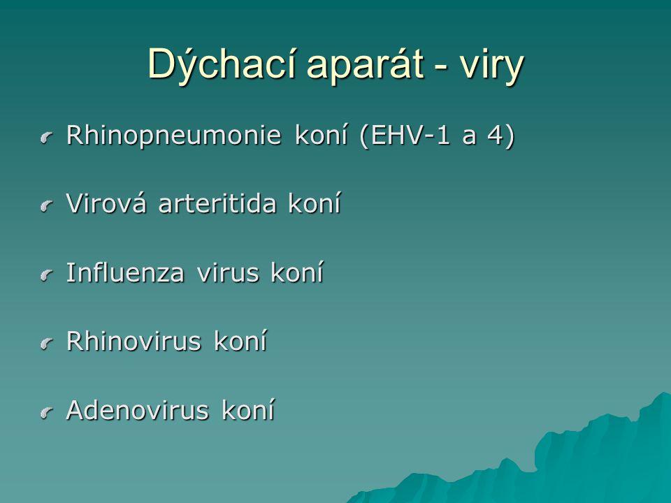 Rhinopneumonie koní RPK  Původce - virus EHV-4, EHV-1  Replikace viru na sliznicích dýchacího aparátu, navození latence  Rhinofaryngitis, tracheobronchitis, horečka  Především u mladých koní do dvou let, starší koně – jen mírné příznaky RPK