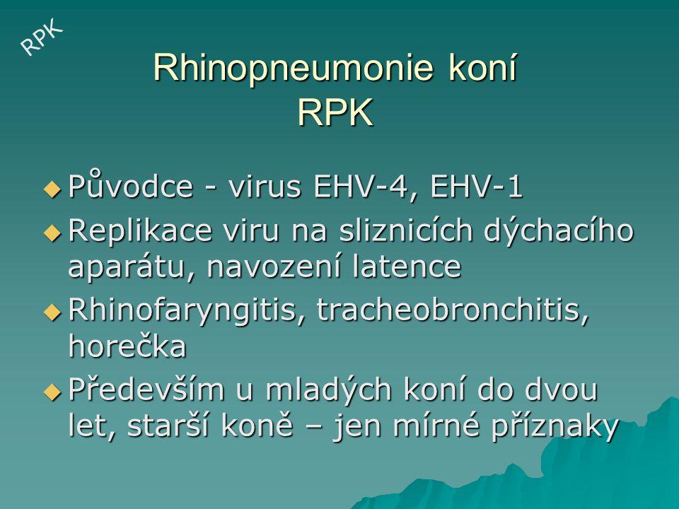 Rhinopneumonie koní  Inkubační doba 2-10 dní  Častá sekundární bakteriální infekce  U EHV-1 bifázická horečka  EHV-1 – fulminantní pneumonie při infekci plodu v pozdní březosti RPK