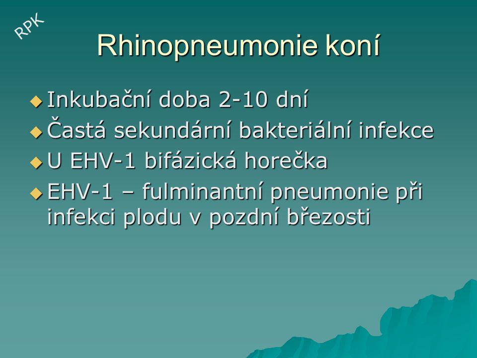 KREVNÍ OBĚH Septikémie  E.coli  Salmonella spp.