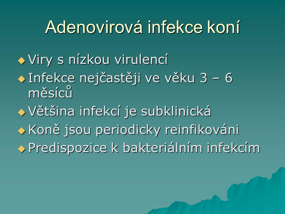 Adenovirová infekce koní  Adenovirová pneumonie –Imunosuprese –Selhání pasivního transferu protilátek  Polysystémové onemocnění –SCID (severe combined immunodeficiency) u arabských hříbat