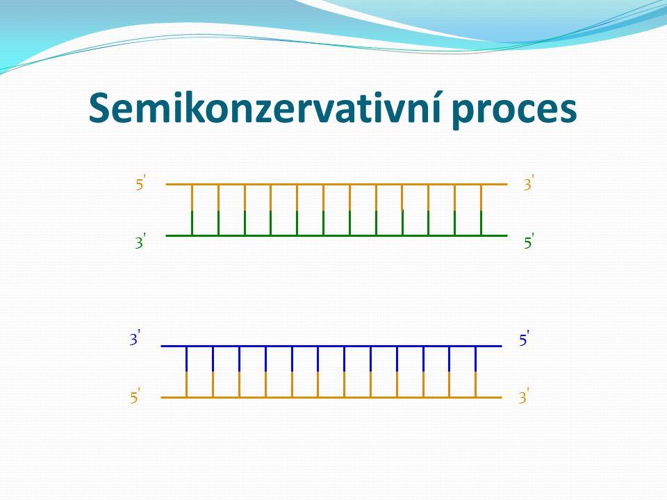 Semikonzervativní proces 5' 3' 5' 3' 5'