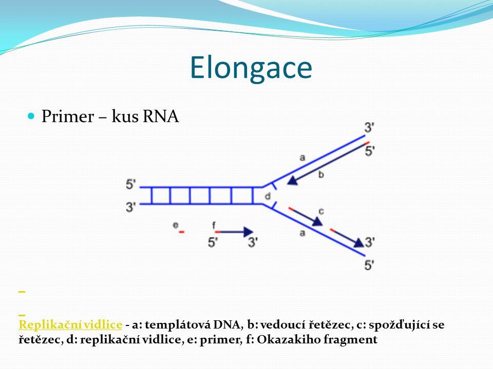 Elongace Primer – kus RNA Replikační vidliceReplikační vidlice - a: templátová DNA, b: vedoucí řetězec, c: spožďující se řetězec, d: replikační vidlic