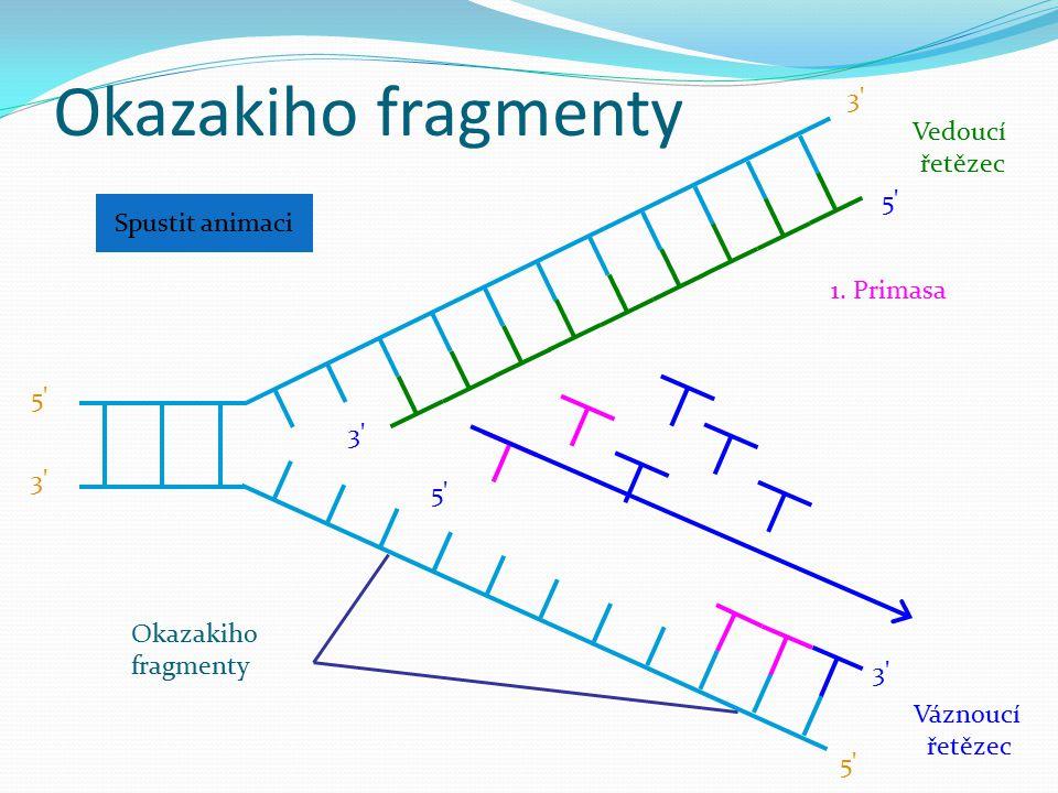Okazakiho fragmenty Váznoucí řetězec 5' 3' 5' 3' Okazakiho fragmenty 1. Primasa Spustit animaci Vedoucí řetězec 3' 5' 3'