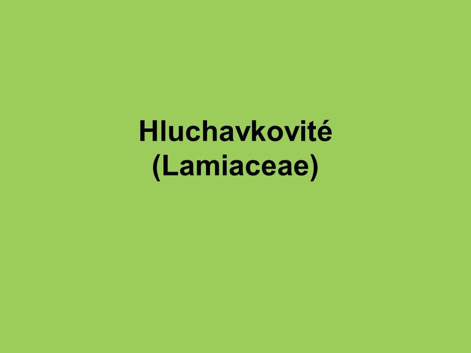Hluchavkovité (Lamiaceae)